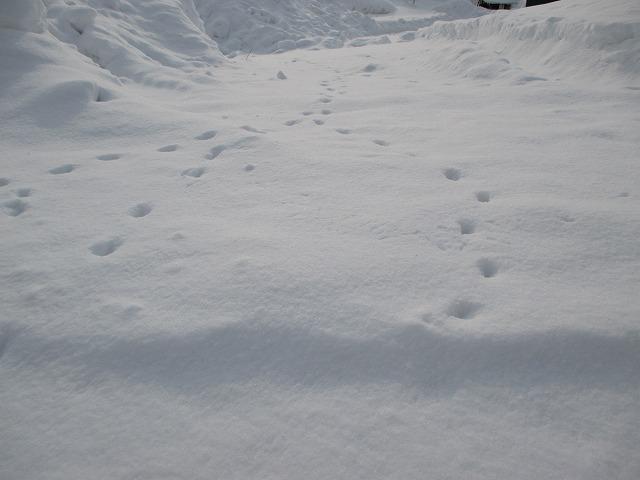 雪道に動物の足跡