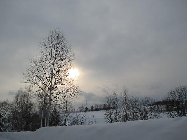 木の隙間から太陽