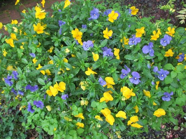 黄色と紫の小花