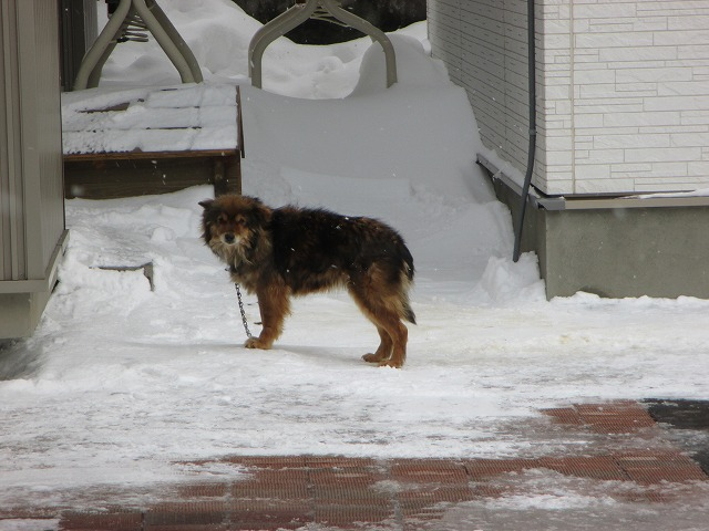 雪の中の犬