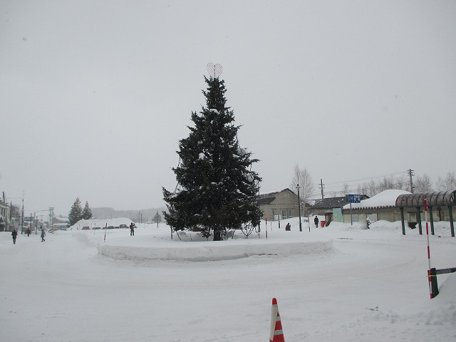 天然のクリスマスツリー