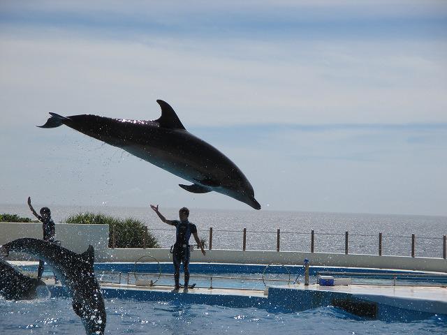 イルカショーのジャンプしているイルカ