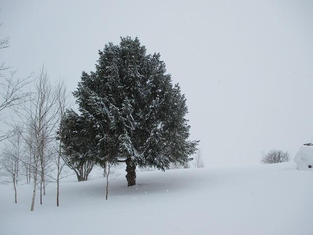 雪が積もっている木