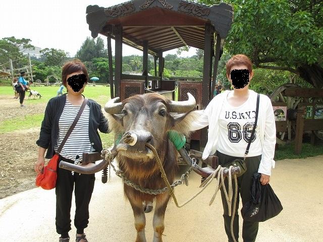 水牛と記念撮影している2人の女性