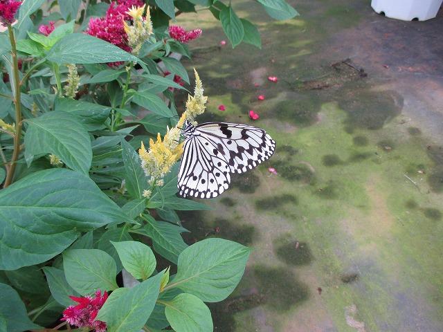 花に止まる蝶々