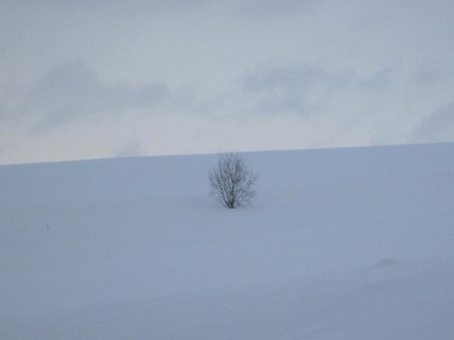 真っ白な雪の中に1本の木