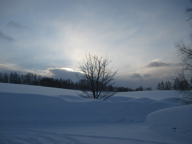 雪の中の一本の木