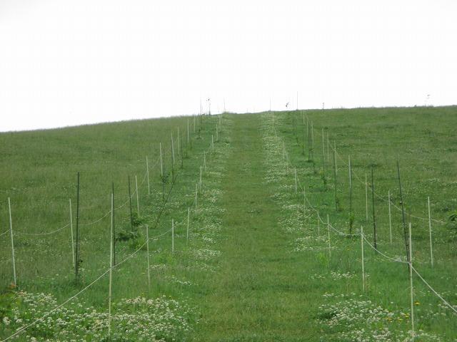 芝生の坂道