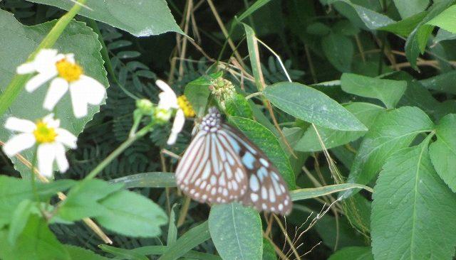 葉にとまる蝶々