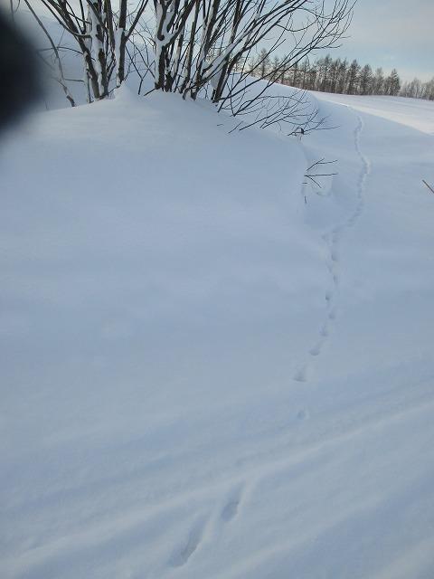 雪の上にキツネの足跡
