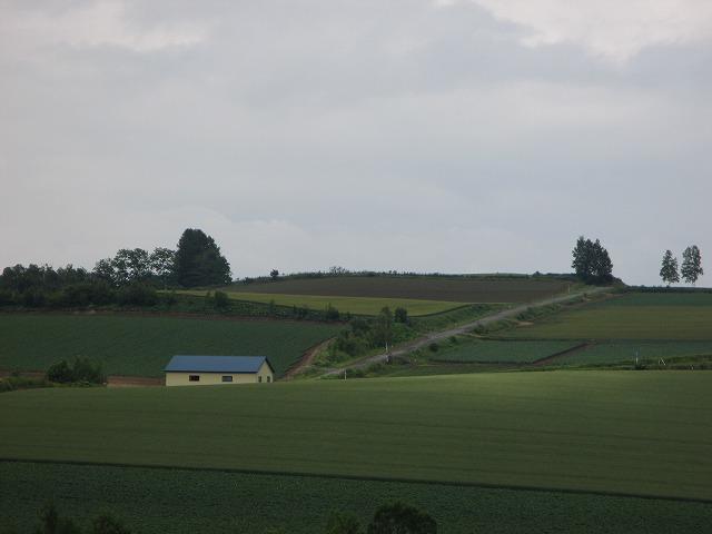 丘の中の青い屋根の家