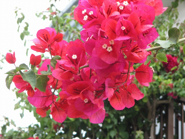 南国の赤い花