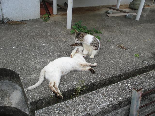 戯れる2匹の猫