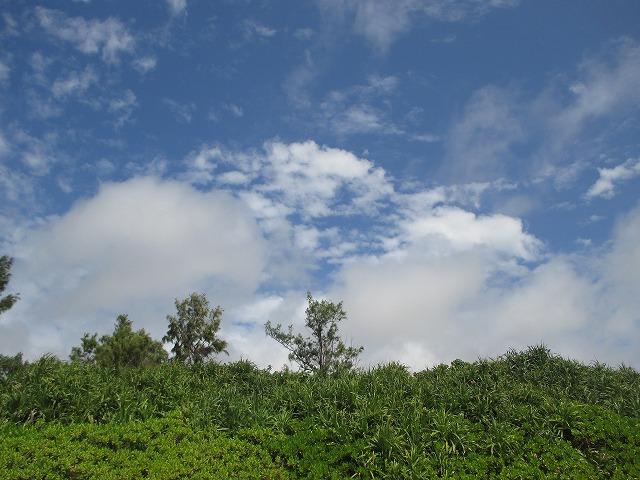 緑の木々と青い空と白い雲
