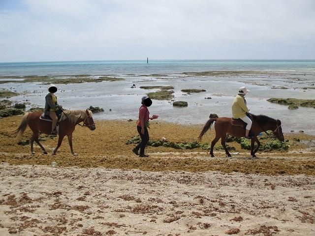 浜辺を馬に乗って散歩する人
