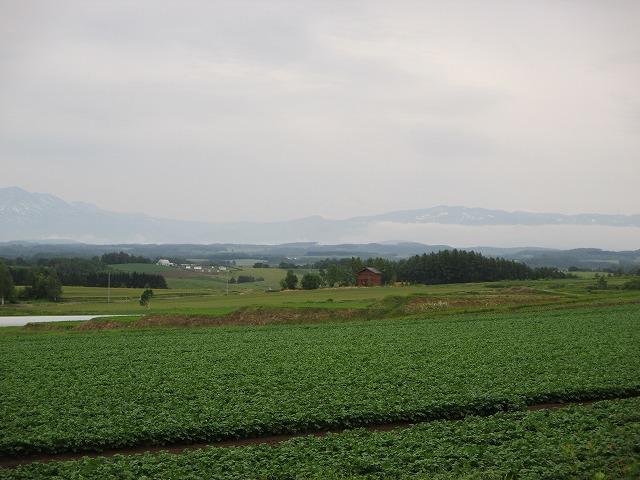 緑が濃い畑