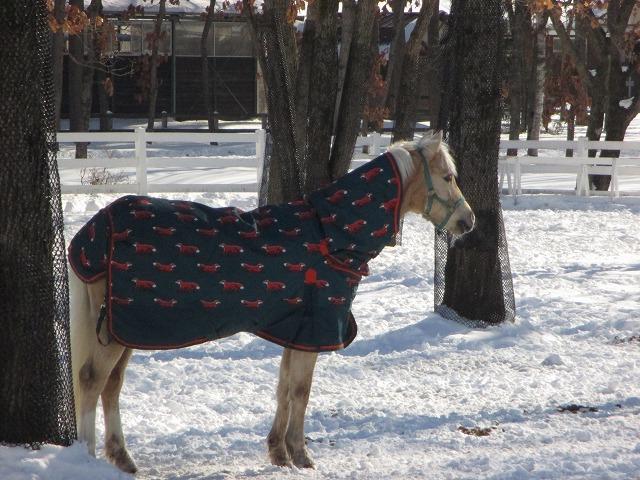 服を着ている馬