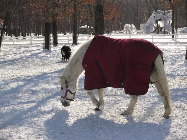 赤い服を着ている馬
