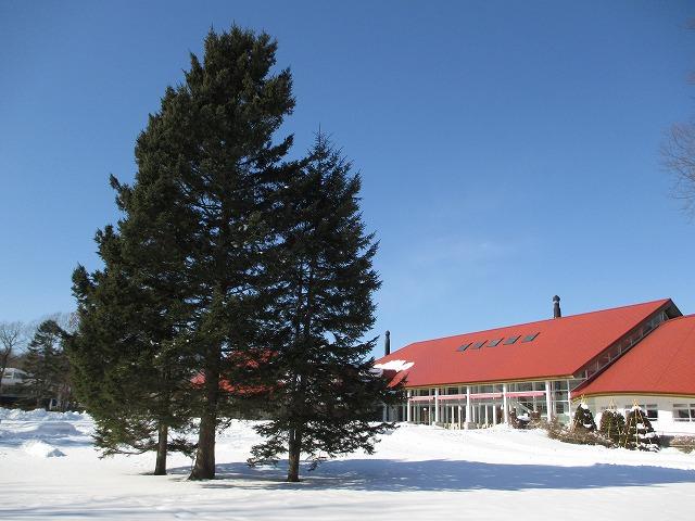 もみの木と赤い屋根の建物