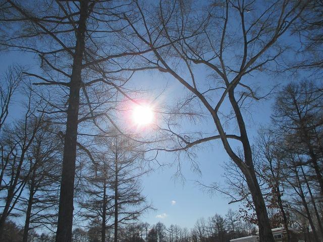 木の間から青い空と太陽