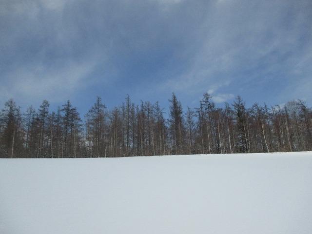 青空と雪原