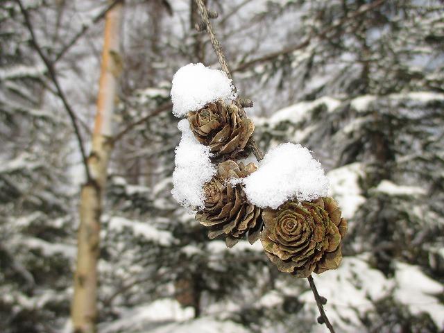 松ぼっくりの頭に雪