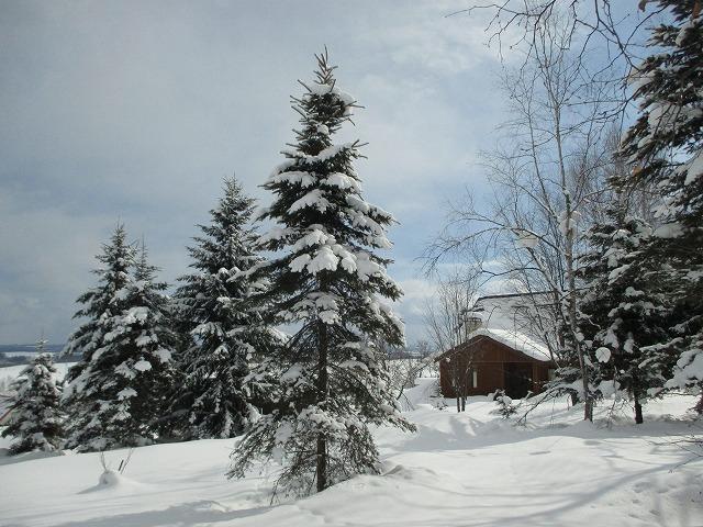 クリスマスツリーみたいな木