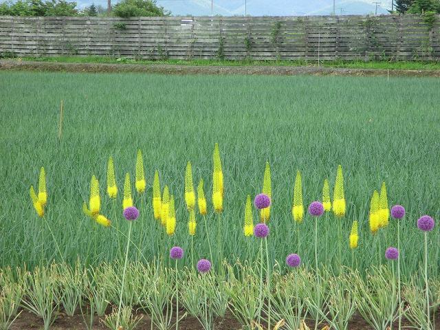 黄色と紫の花
