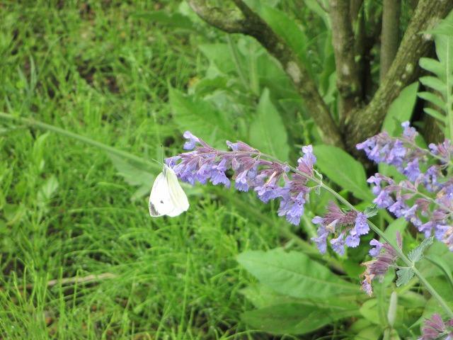 紫の花に止まる蝶々