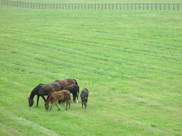 馬見の丘から見た景色