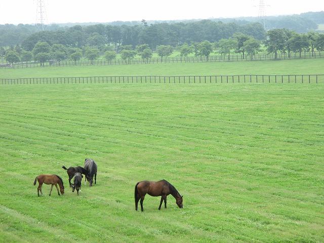 家族らしき5匹の馬