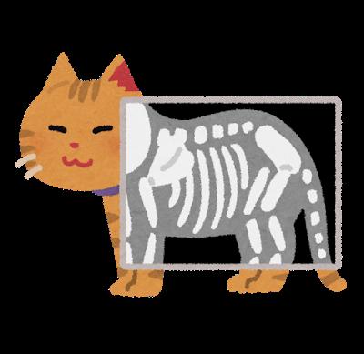 猫のレントゲンのイラスト