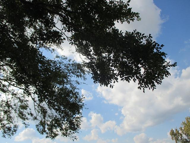 木の間から青空
