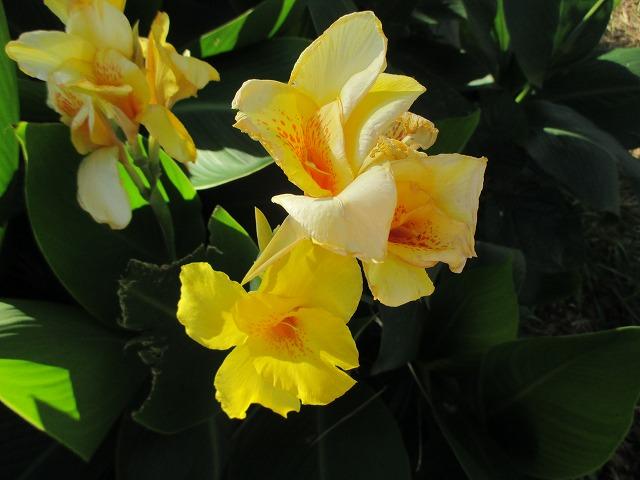 黄色いユリの花