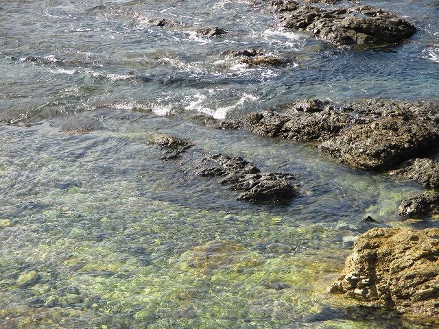 透明な海の水