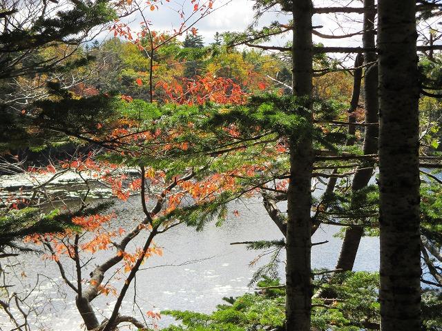 紅葉している木