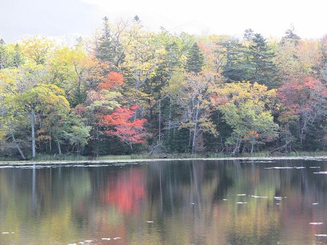 紅葉の木と三湖