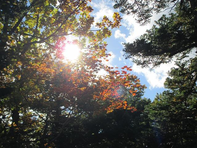 木の間から太陽