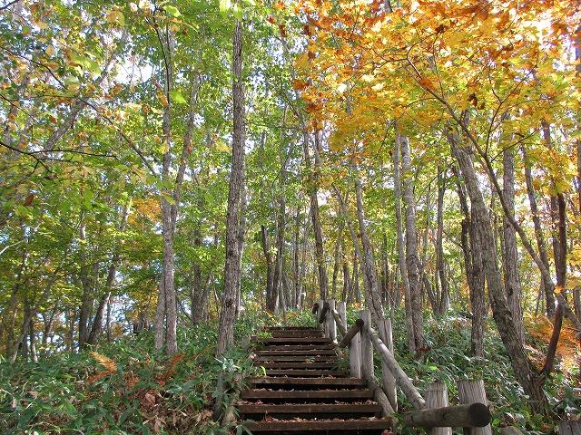 紅葉した木と階段