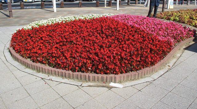 赤・白・ピンクの花壇の花