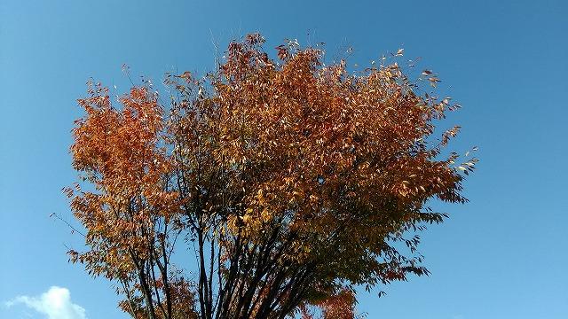 赤く色づいた木
