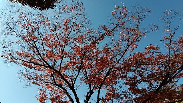 赤く色づいた木と青空