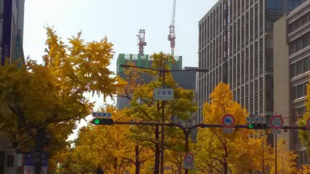 淀屋橋・いちょう並木