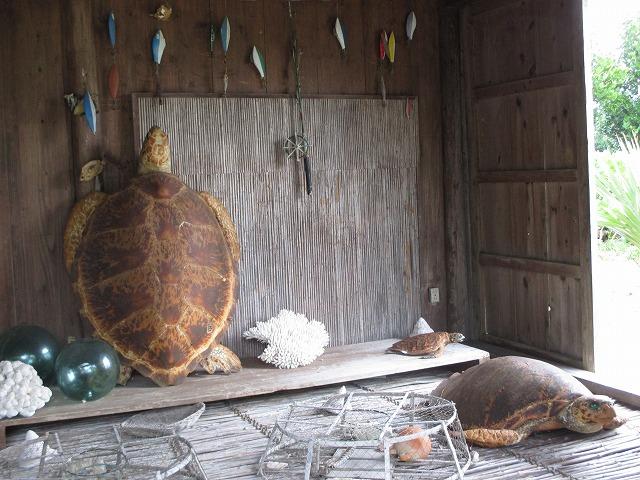 漁具とウミガメのはく製
