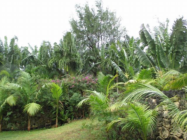 椰子などの木々