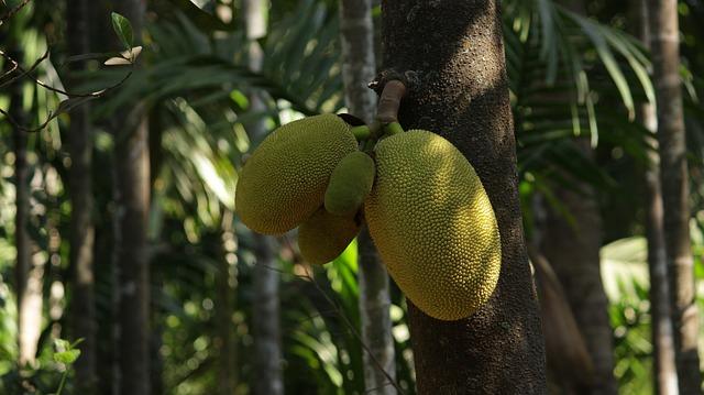 パラミツというフルーツ