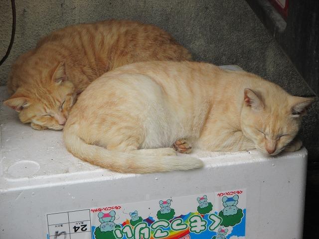 茶トラ・薄茶トラの二匹の猫