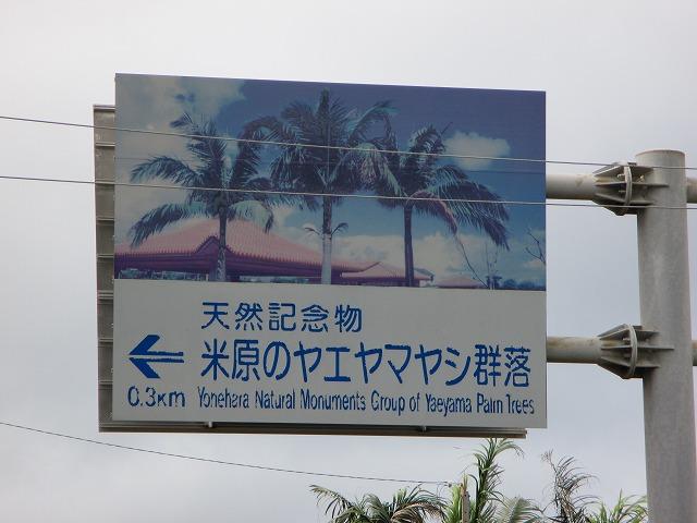 米原のヤエヤマヤシ群落の案内看板