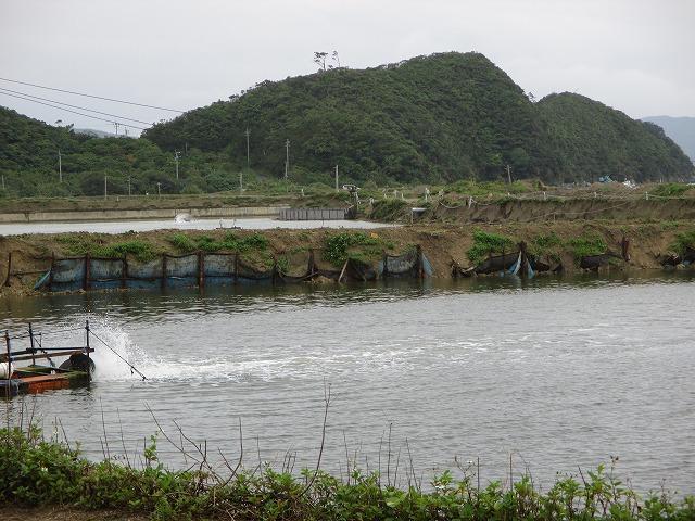 車海老養殖場