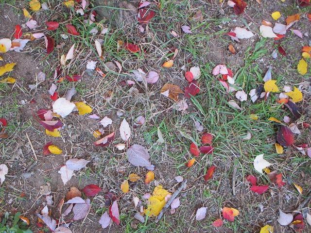 地面に落ちた色とりどりの葉っぱ
